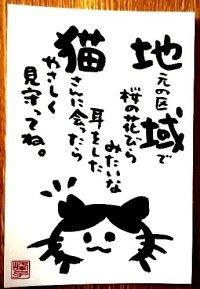 墨で手書き 絵葉書 桜猫A